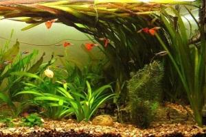 аквариумные растения уход и содержание