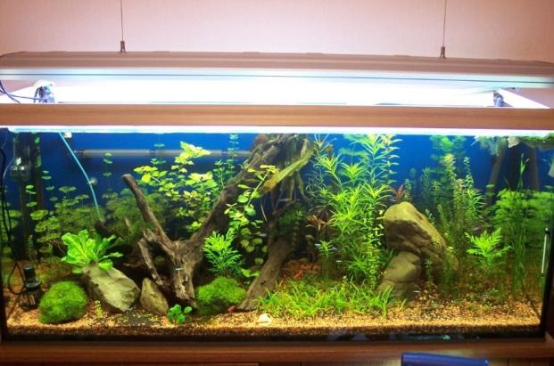 освещение аквариумных растений