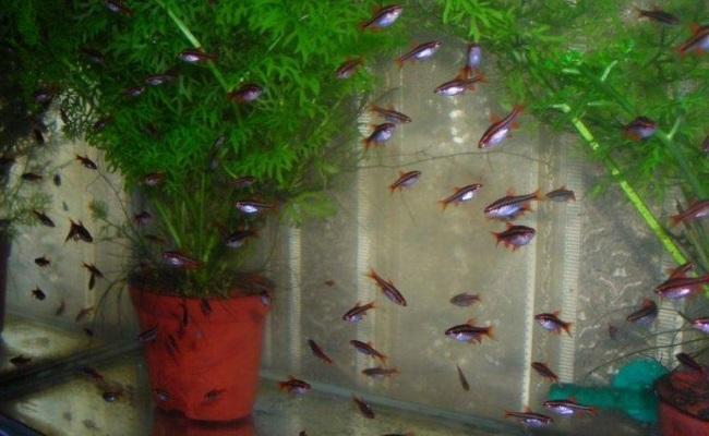 аквариум с растением в горшке