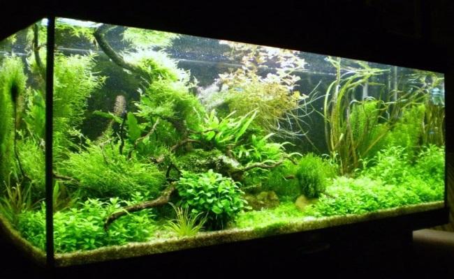 как завести аквариум дома