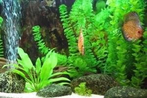 живые или искусственные растения для аквариума