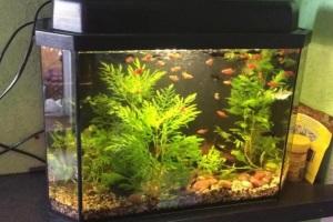 10 самых неприхотливых рыбок для маленького аквариума