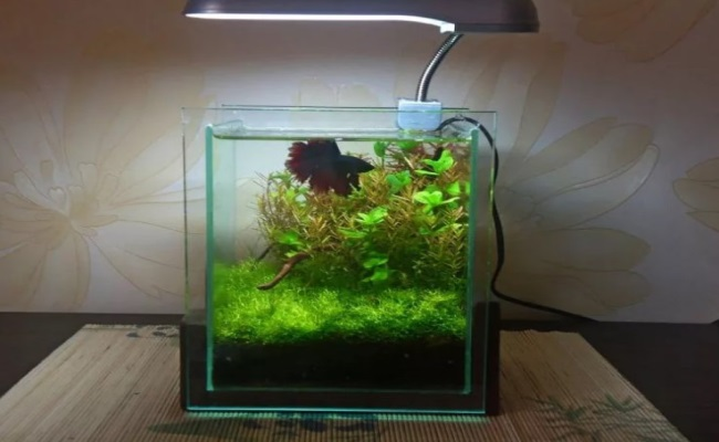минусы маленького аквариума