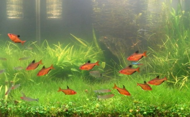 мутная старая вода в аквариуме