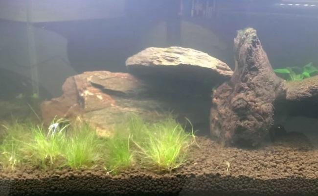 помутнела вода при запуске аквариума