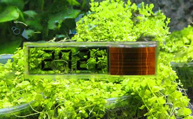 жидкокристалический аквариумный термометр