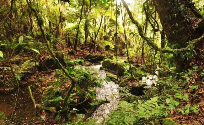 естественная среда обитания анубиасов