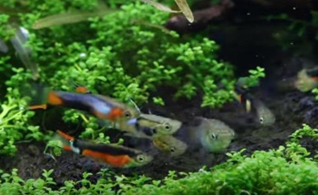 группа эндлер в маленьком аквариуме